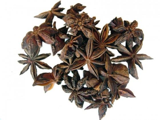Star anise (Illicium anisatum)