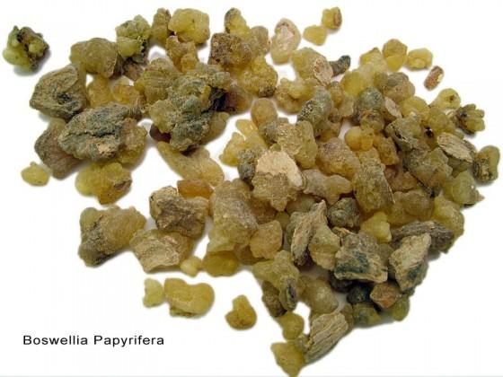 Incense (Boswellia papyrifera)