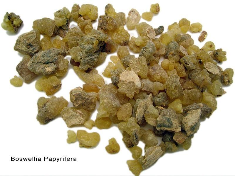 Incenso (Boswellia Papyrifera)