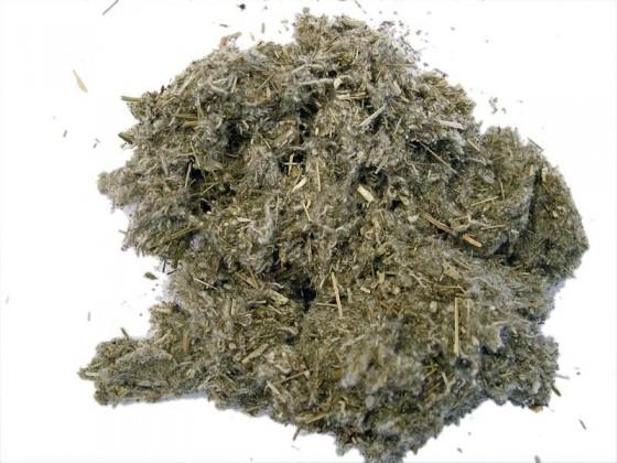 Salvia del deserto (Artemisia tridentata)