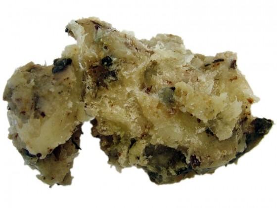 Elemi Manila (Canarium luzonicum)