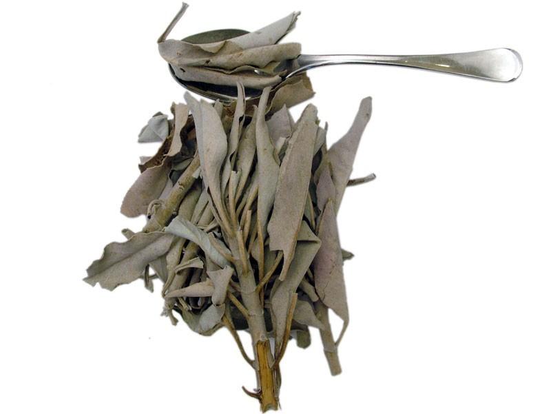 Salvia Bianca (Salvia apiana)