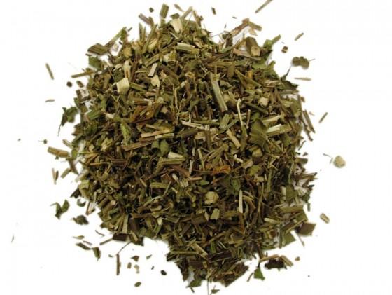 Common Verbena (Verbena Officinalis)