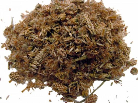 Pine buds (Pinus Sylvestris)