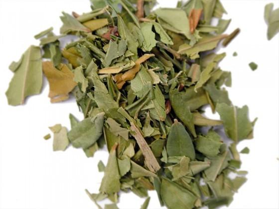 Myrtle (Myrtus communis)