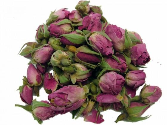 Rose (Rosa gallica)