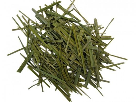 Sweetgrass (Hierochloe...