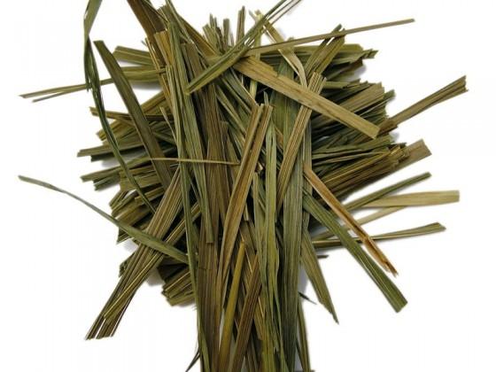 Sweetgrass (Hierochloe odorata)