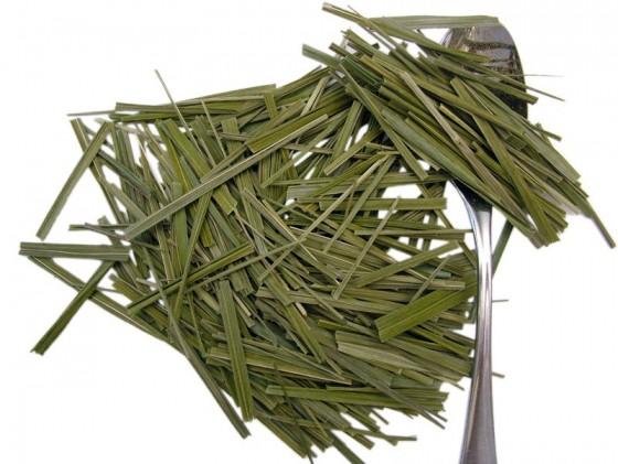 Gliceria (Hierochloe odorata)